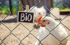 Życiorys kurczaki na domu gospodarstwie rolnym zdjęcia royalty free