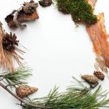Życiorys naturalny organicframe od lasowych deteails na białym tle, życzliwym, ekologia, ziemskiego dnia kreatywnie pomysł, kopii obraz royalty free