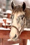 życzliwy koń Fotografia Royalty Free
