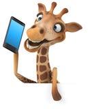 żyrafy Zdjęcia Royalty Free