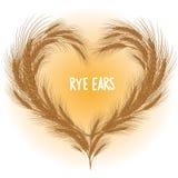 Żyto ucho serce odizolowywający Fotografia Royalty Free