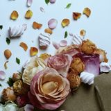 Żywa róża kwiatów rama Piękny kwiecisty tła… tło z kolorowymi kwiatami Rocznik filtrował szablon skakać wakacje z kreatywnie prze Zdjęcie Royalty Free