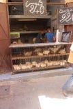 Żywi kurczaki dla sprzedaży w zakurzonym Medina Fes Maroko zdjęcia stock