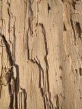 żywica filar stara drewniana tekstura zdjęcie stock