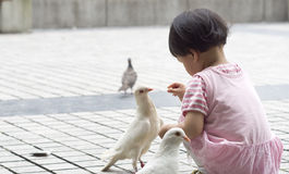 żywieniowi gołębie obraz stock