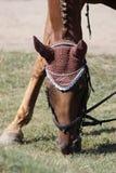 żywieniowy koń Zdjęcie Stock