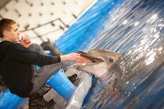 żywieniowy morświn Zdjęcia Royalty Free