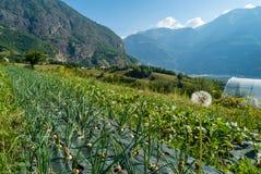 Żywności organicznej uprawa w Francja Fotografia Stock