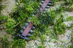 Żywopłot drobiażdżarki i zieleń krzaka ścinki Zdjęcie Royalty Free