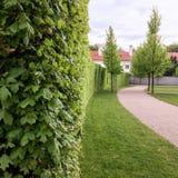 Żywopłotu i potomstw drzewa w parku fotografia royalty free