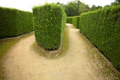 Żywopłotu zielony flowerbed Obraz Stock