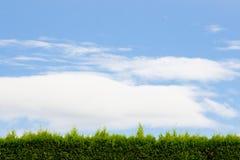 żywopłotu zielony niebo fotografia stock