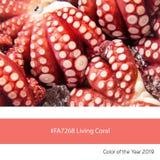Żywy Koralowy kolor rok, ośmiornica obrazy royalty free