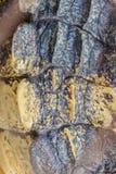 Żywy krokodyla ogonu wzór od żywego ciała dla tła Zdjęcie Royalty Free