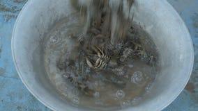 Żywy rakowy złapany w rzece nalewa w obmycie basen przed gotować zbiory
