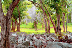 Ƒ ¹ forestà весны Стоковая Фотография RF