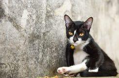 ? negro precioso del ¹ de Cat Relax On Floorà Fotografía de archivo libre de regalías
