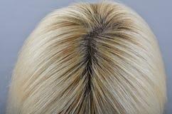 Άβαφες ξαναμεγαλώνως ρίζες του κεφαλιού της ξανθής γυναίκας Στοκ Φωτογραφία