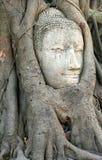 άγαλμα προσώπου του Βούδα Στοκ Εικόνες