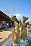 Άγαλμα γυναικών στο ANG Khang, Chiang Mai Doi Στοκ εικόνες με δικαίωμα ελεύθερης χρήσης