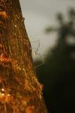 Άγνωστα έντομα Στοκ Εικόνες