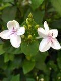 Άγνωστη ομορφιά λουλουδιών Στοκ εικόνα με δικαίωμα ελεύθερης χρήσης