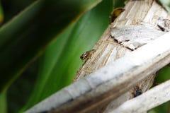 Άγνωστο έντομο Στοκ Εικόνες