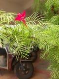 Άγνωστο ΚΌΚΚΙΝΟ ` λουλούδι ` στοκ εικόνες με δικαίωμα ελεύθερης χρήσης