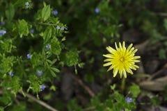 Άγνωστο μικρό wildflower στοκ φωτογραφίες