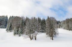Άγονα χιονώδη δέντρα Στοκ φωτογραφία με δικαίωμα ελεύθερης χρήσης