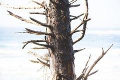 Άγονο δέντρο κοντά στο φωτεινό ωκεανό στοκ εικόνες