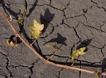 άγονο νεκρό φυτό εδάφους Στοκ Εικόνες