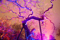 Άγονο υποστηριγμένο δέντρο τη νύχτα Στοκ φωτογραφίες με δικαίωμα ελεύθερης χρήσης
