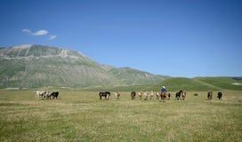 Άγρια άλογα και ένας κάουμποϋ στο Pian Grande Castelluccio Di Norcia στοκ εικόνες με δικαίωμα ελεύθερης χρήσης