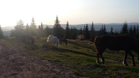 Άγρια άλογα μέσω του δάσους στοκ φωτογραφίες