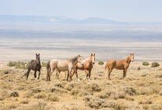 Άγρια άλογα που στέκονται προστατευτικά γύρω από το πουλάρι Στοκ εικόνα με δικαίωμα ελεύθερης χρήσης