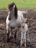 Άγρια άλογα Στοκ εικόνα με δικαίωμα ελεύθερης χρήσης