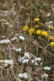 Άγρια ακανθώδη εγκαταστάσεις και λουλούδια Στοκ Εικόνες