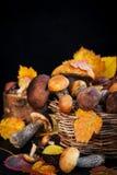Άγρια δασικά εδώδιμα μανιτάρια & x28 boletus& x29  στο καλάθι Στοκ Φωτογραφίες