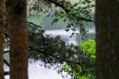 Άγρια δασική λίμνη ή λίμνη Στοκ φωτογραφία με δικαίωμα ελεύθερης χρήσης