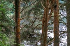 Άγρια δασική λίμνη ή λίμνη Στοκ φωτογραφίες με δικαίωμα ελεύθερης χρήσης