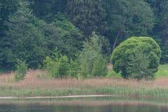 Άγρια δασική λίμνη ή λίμνη Στοκ Φωτογραφία