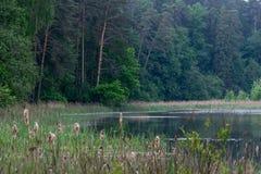 Άγρια δασική λίμνη ή λίμνη Στοκ Φωτογραφίες