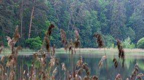 Άγρια δασική λίμνη ή λίμνη Στοκ εικόνα με δικαίωμα ελεύθερης χρήσης