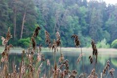 Άγρια δασική λίμνη ή λίμνη Στοκ εικόνες με δικαίωμα ελεύθερης χρήσης
