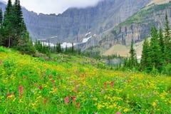 Άγρια αλπικά λουλούδια στο εθνικό τοπίο πάρκων παγετώνων Στοκ Φωτογραφίες