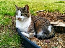 Άγρια γάτα αλεών Στοκ φωτογραφία με δικαίωμα ελεύθερης χρήσης