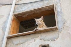 Άγρια γάτα οδών στοκ φωτογραφίες