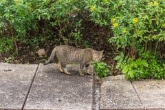 Άγρια γάτα σχεδίων τιγρών Στοκ εικόνα με δικαίωμα ελεύθερης χρήσης