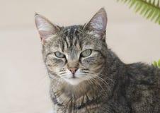 Άγρια άγρια γάτα Στοκ Φωτογραφία